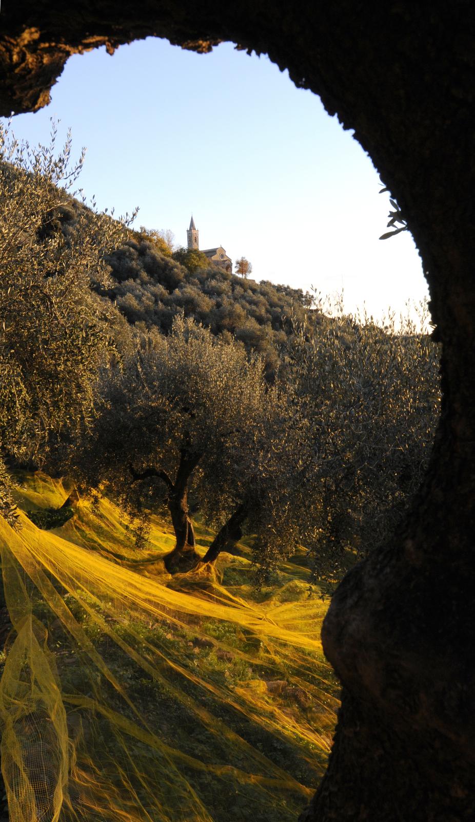 Santuario di Montegrazie